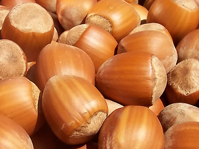 hazelnut oil